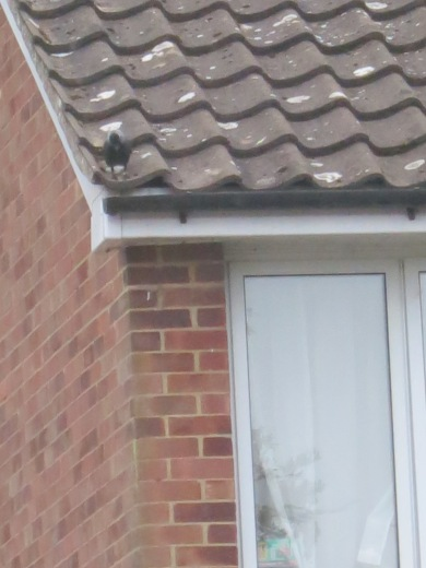 Down the roof, little by little, and under the tiles.