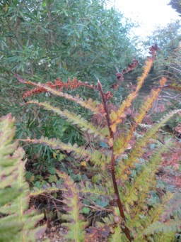 Two brown fronds